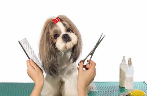 Cortarle el pelo al perro con tijeras