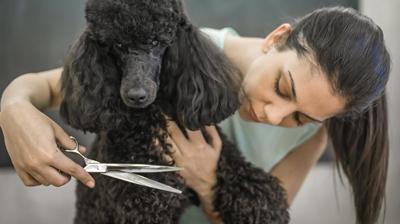 Tijeras cortar pelo al perro - Grooming