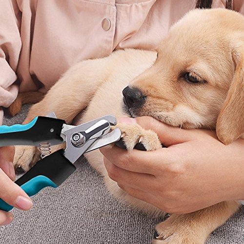 Daoxu Tijeras Profesional Alicate Cortauñas Para Perro Y Gato Lima De Uñas Para Cuidado De Las Uñas De Las Pequeñas Medianas Y Grandes Perros